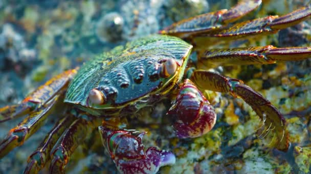 Extreme Closeup of a Small Crab in Thailand