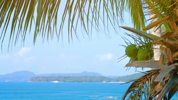 Egy Palmtree fiatal kókuszdió. Egy trópusi tengerparti Thaiföldön