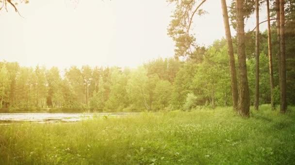video 1080p - shore lesní jezírko s sluneční paprsky
