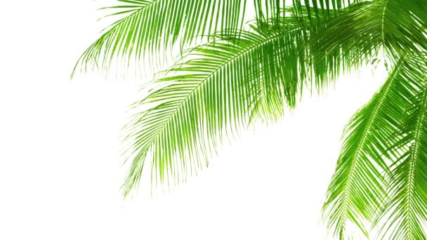 Palm listy izolované na bílém pozadí. Dobrý materiál pro koláže