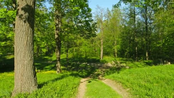 Panorama z dubového lesa s pěšina