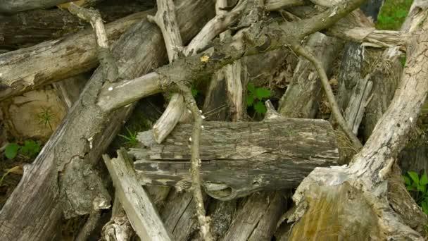 Hromadu ztrouchnivělého dřeva v dubovém lese
