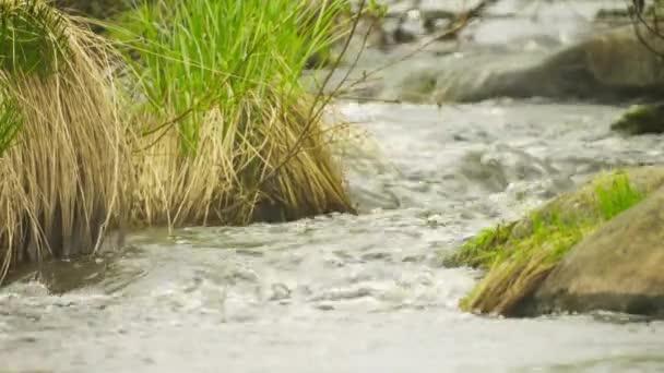 Pramen potoka v severní lesní zblízka