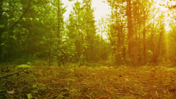 Člověk jde na severní Les