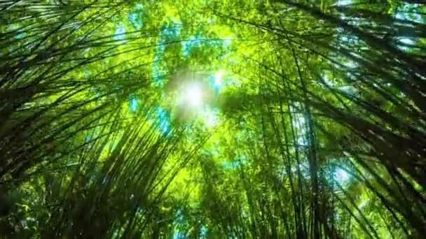 Slunce přes tyčící bambusové stojany