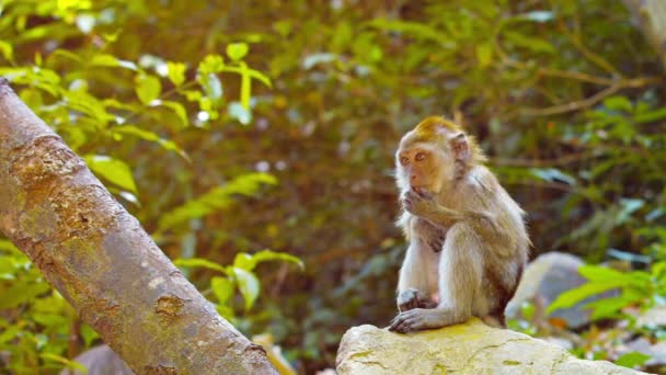 Cute Monkey Sits Contemplatively