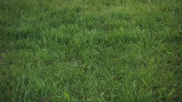 Labdarúgás Rolling a frame a Grassy Field