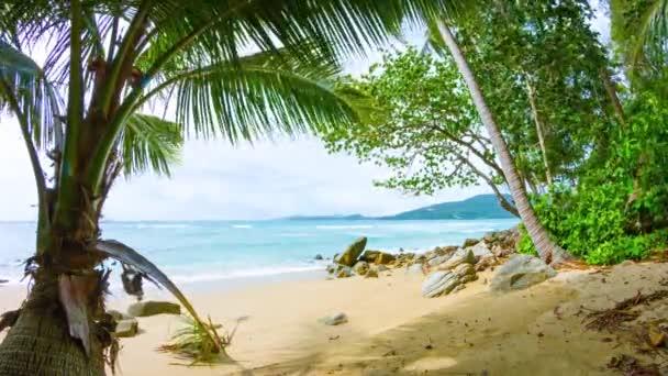 Větve stromu kymácí ve větru na tropické pláži