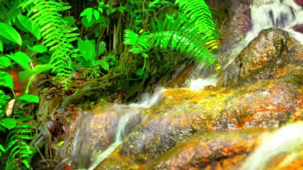 Natural Waterfall in the Jungle with Sound