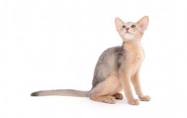 Cat on white background