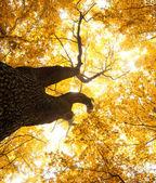őszi levelek háttér
