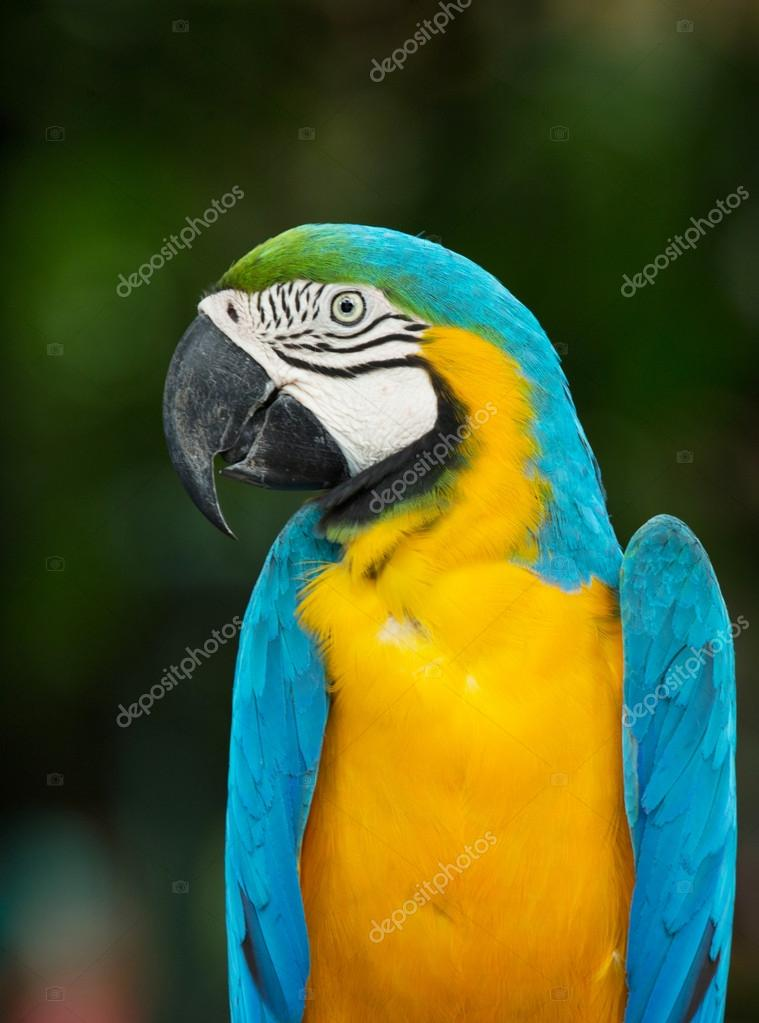 colorful Macaws parrot