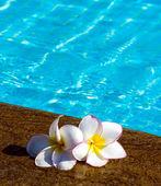 Flowers on swimming pool