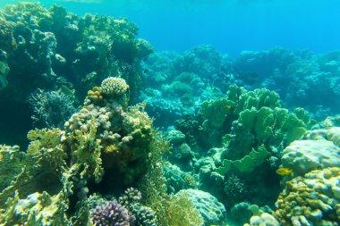 Underwater panorama with fish