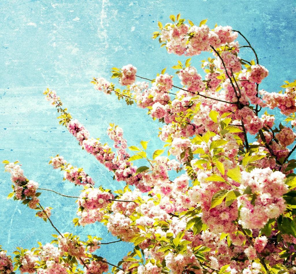 Grunge  cherry flowers