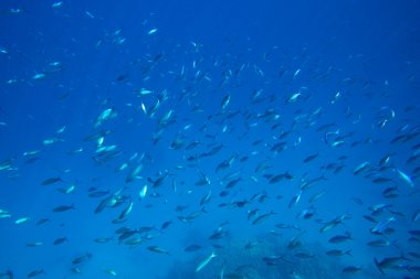 Underwater panorama with fish