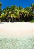pláže a palmami