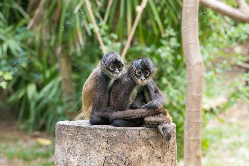Monkeys animals on nature