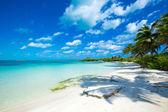 Fotografie Tropical sea beach