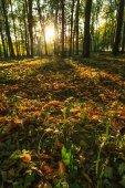 Fotografie lesní stromy v lese