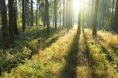 lesní stromy v zeleném