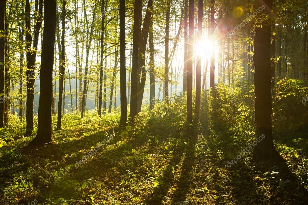 Фотообои Forest trees in  wood