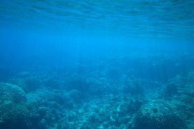 sea Underwater panorama