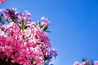 pink flowers on sky
