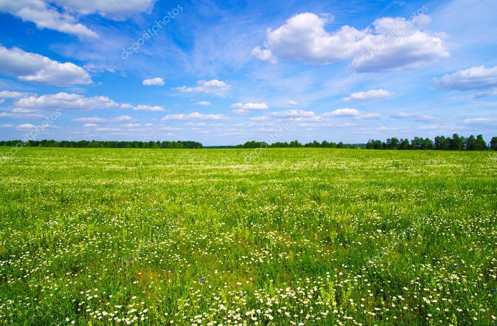 Prato verde sotto un cielo blu foto stock for Prato verde