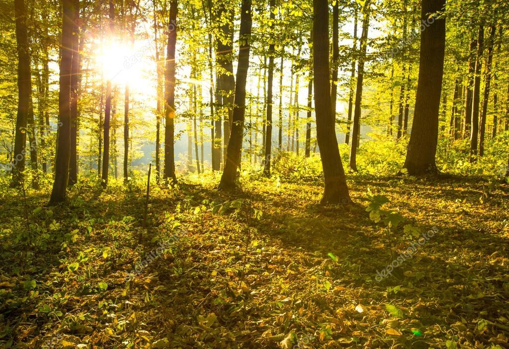 Фотообои Sunrise in autumn forest