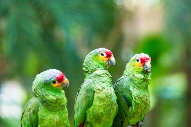 cute parrots birds