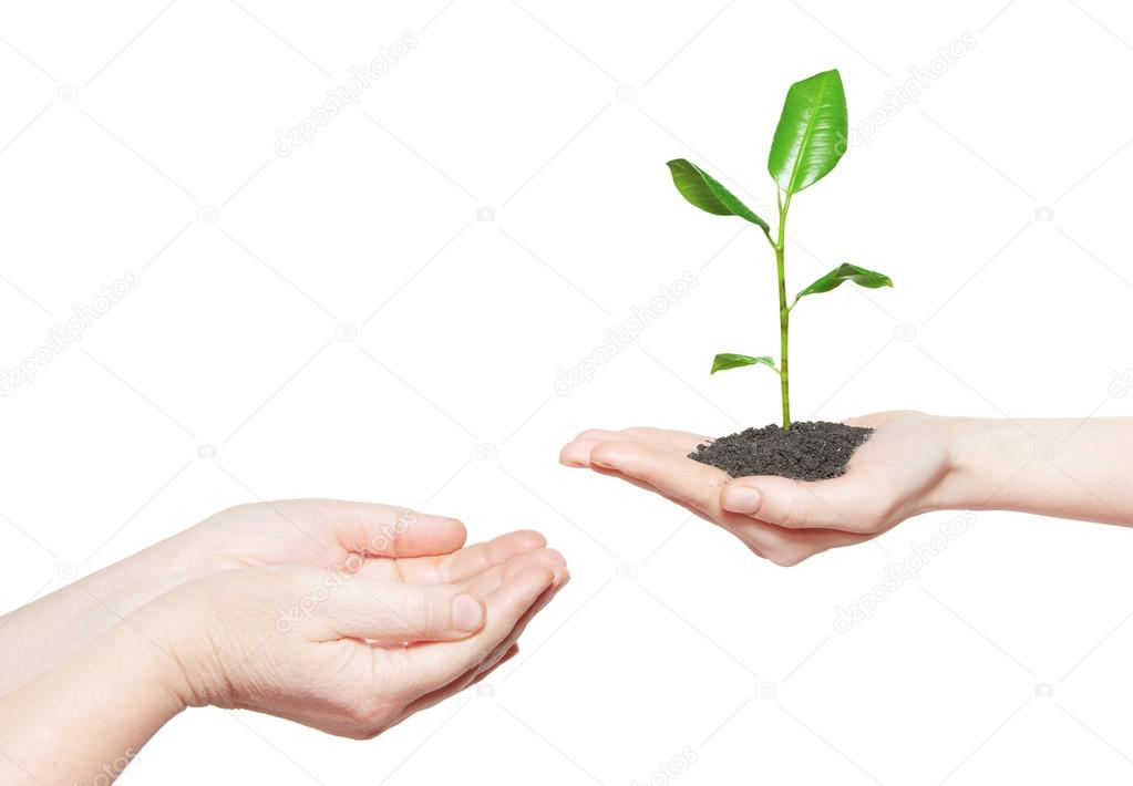 Human hands holding green plant