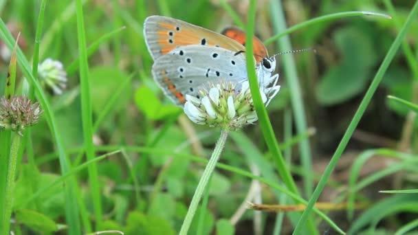 motýl v trávě