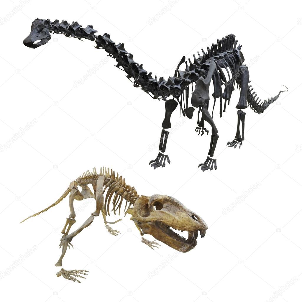esqueleto del dinosaurio — Foto de stock © uatp12 #59030799