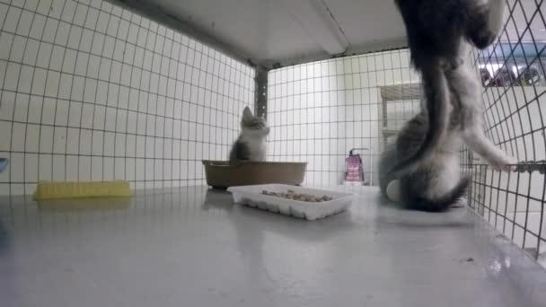 Kleine Kätzchen im Käfig im Tierheim