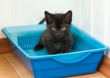 Small black kitten in plastic litter cat on floor
