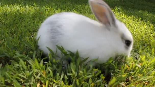 white rabbit on green grass