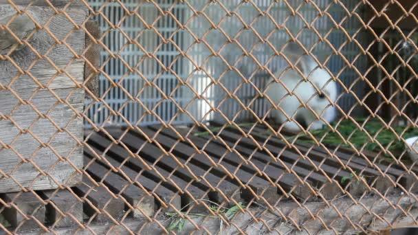 coniglio bianco in gabbia