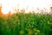 Krásné zelené louce za úsvitu