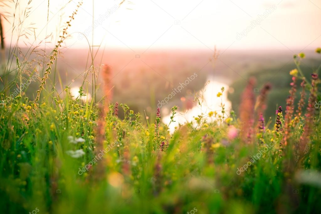 Beautiful green meadow at sunrise