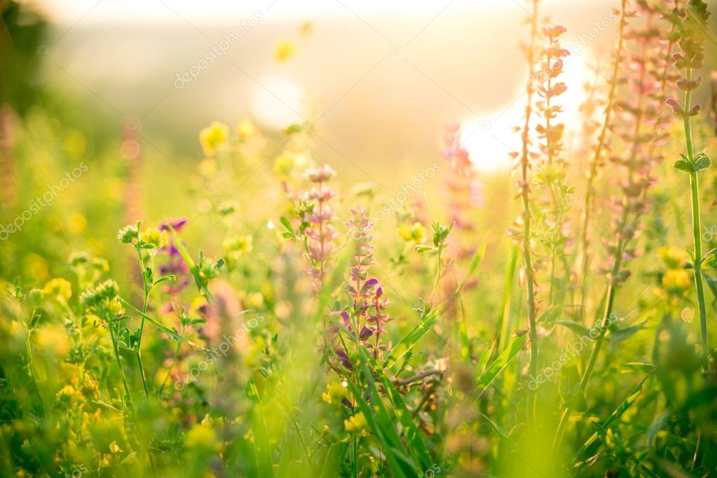 Красивые летние цветы на лугу — Стоковое фото © jeka2009 ...