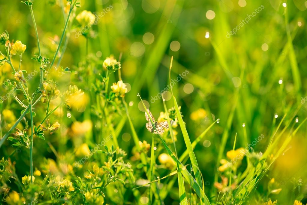 Fresh green grass and yellow wildflowers