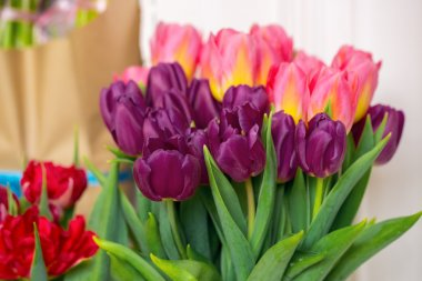 Beautiful pink and purple tulips