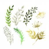 Fényképek Vektor sor akvarell fehér papírra festett virágok. Vázlat a virágok és gyógynövények. Akvarell vektor-illusztráció