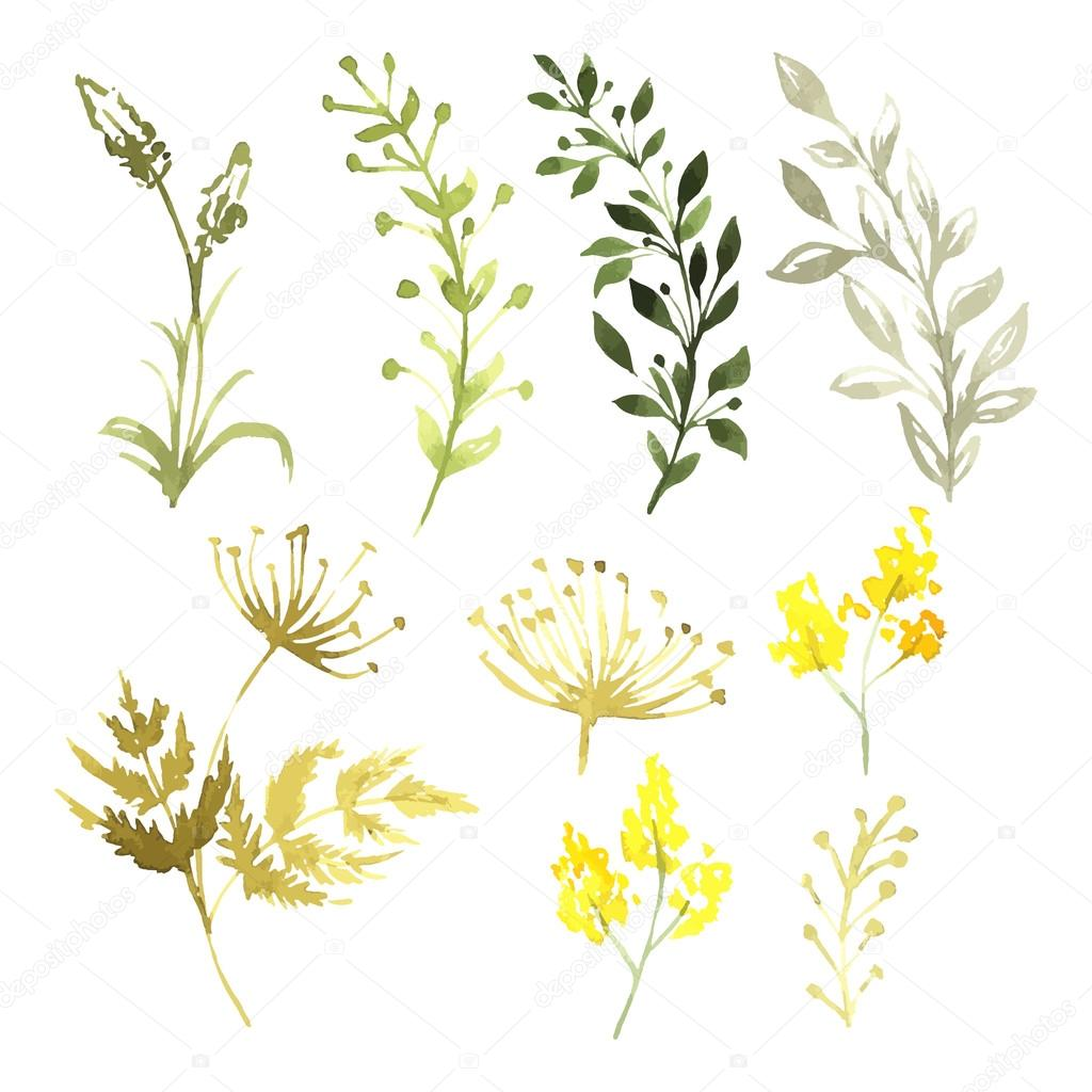 Vector Set of flowers painted in watercolor on white paper. Sketch of flowers and herbs. Vector watercolor illustration