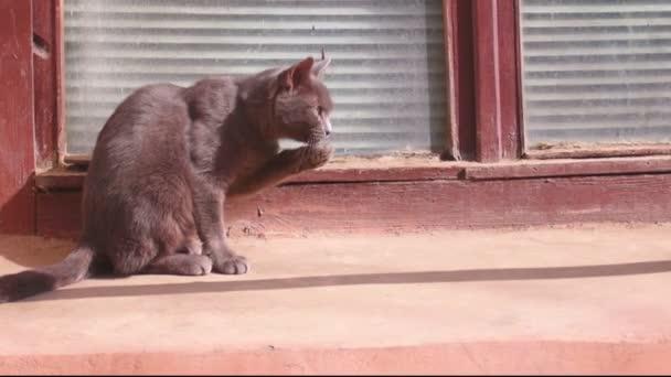 niedliche wilde Katze putzt ihr Fell auf der Straße bei Sonnenuntergang