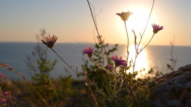 Divoké květiny proti horizontu moře na sanset