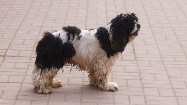 Černobílý pes