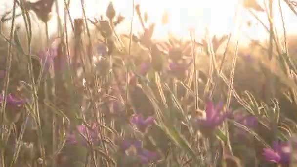 Fialové květy na vítr