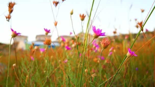 Malé fialové divoké květiny se zakytnou ve větru.